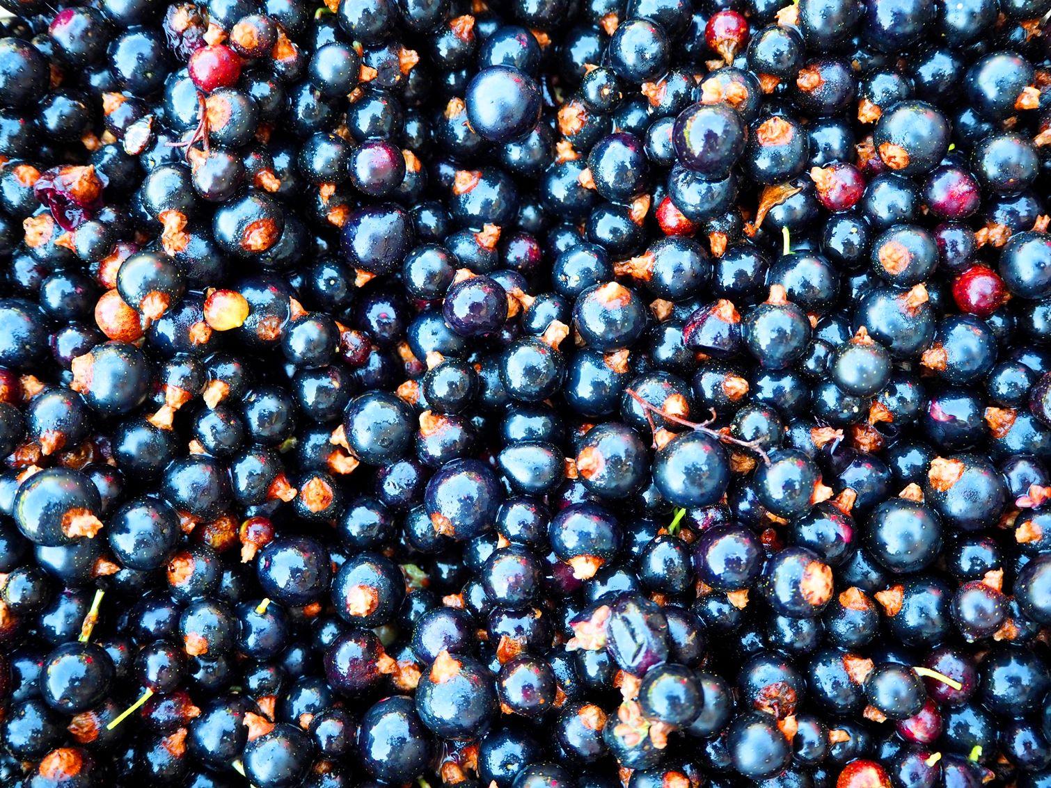 Плодове от касис