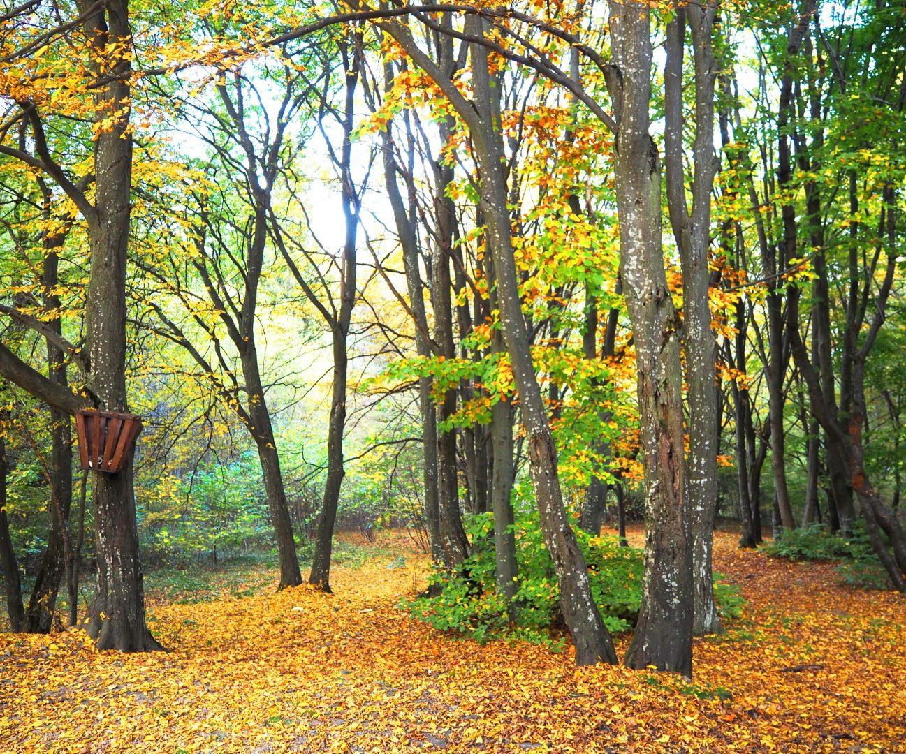 Село Бистрица, природен парк Витоша