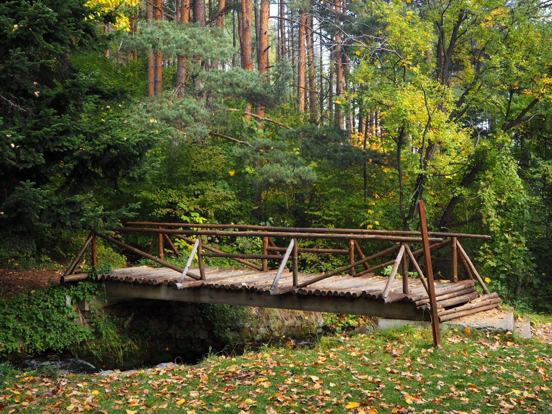Мост в гората на село Бистрица