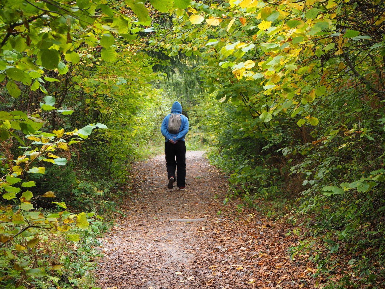 Пътека в гората на село Бистрица, природен парк Витоша