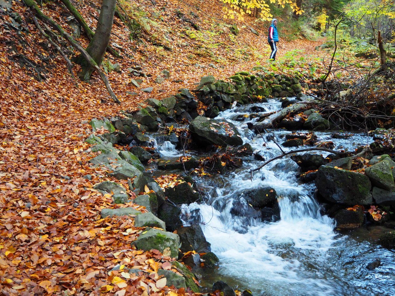 Река в гората на село Бистрица