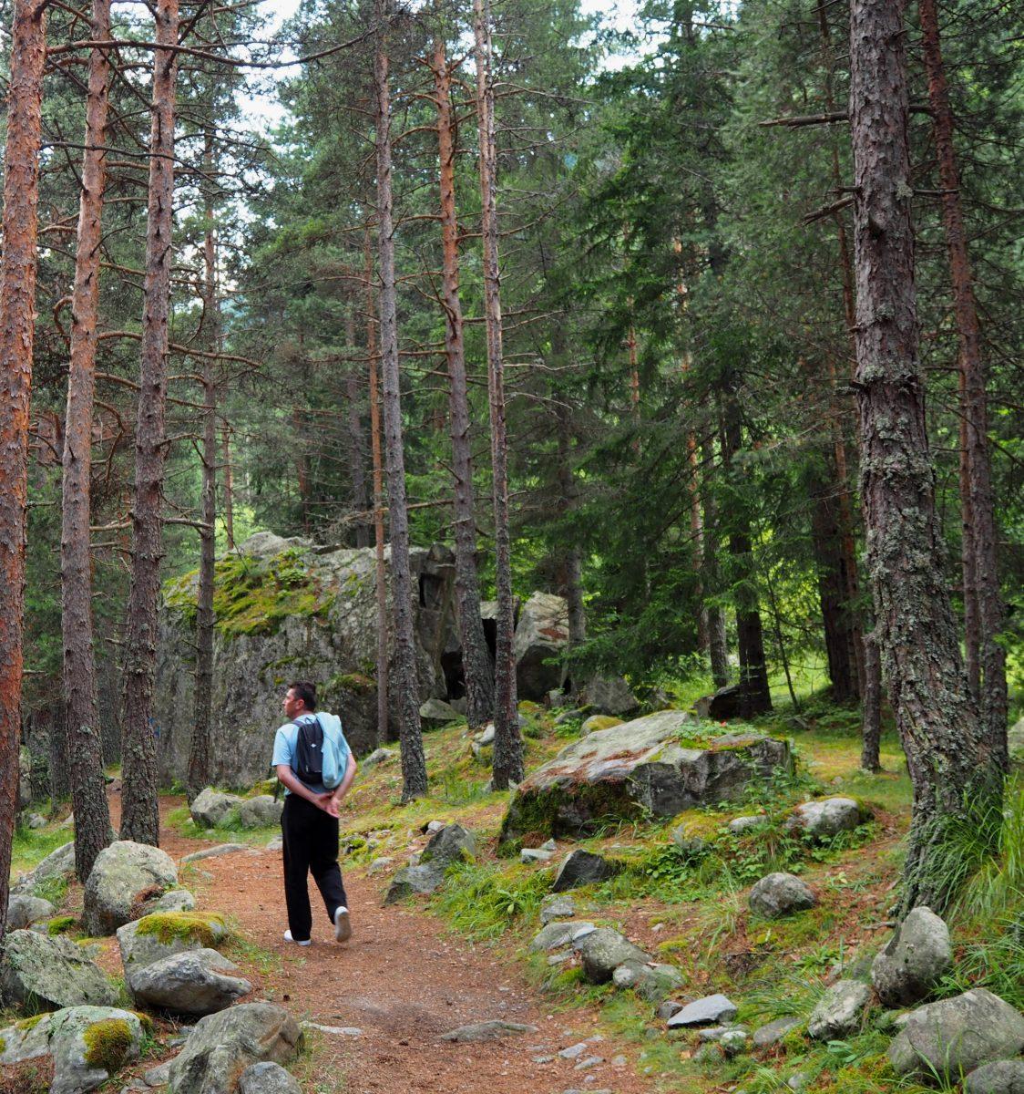 В гората на село Бели Искър, Рила
