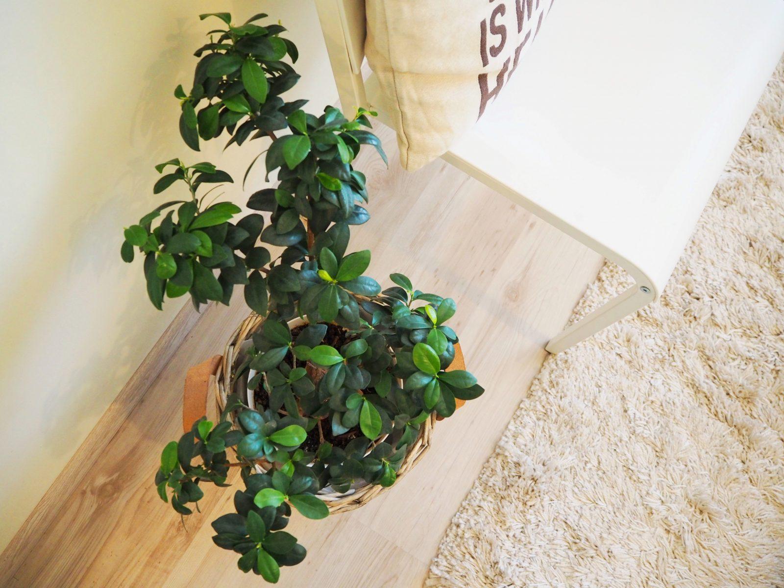 Природата вкъщи: дърво в саксия