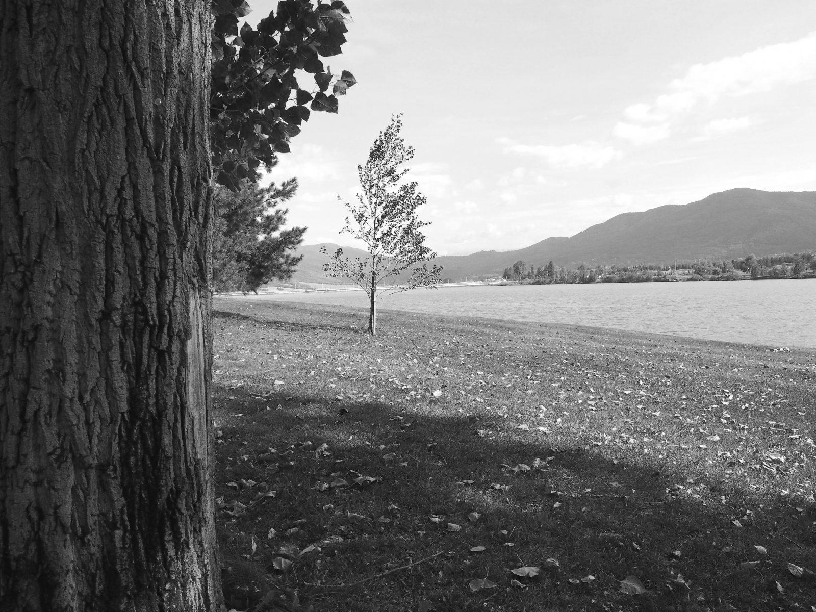 Езерото в град Правец