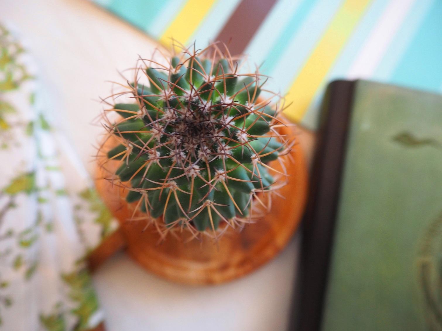Природата вкъщи: кактус